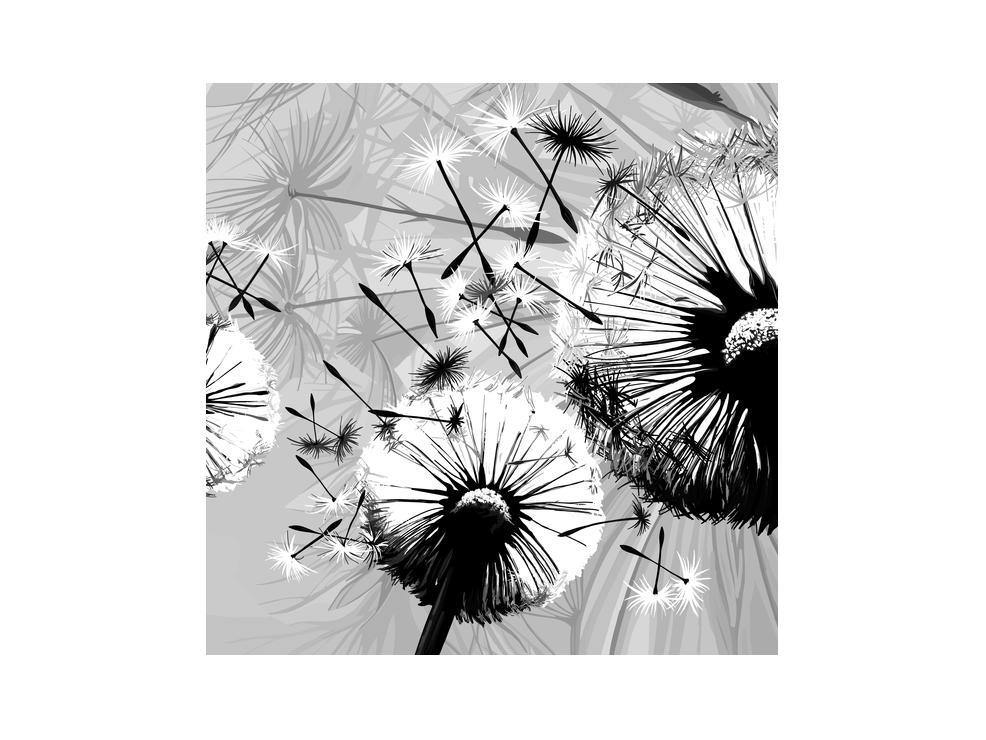Moderní obraz černobílých pampelišek (K014188K3030)