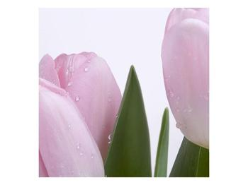 Obraz růžových tulipánů (F000389F3030)