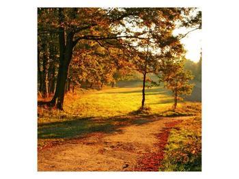 Obraz podzimního parku (F001291F3030)