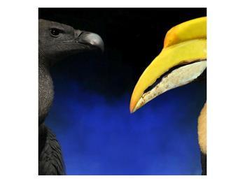 Obraz ptačích zobáku (F001358F3030)