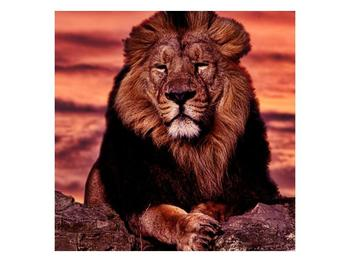Obraz krále zvířat (F001507F3030)