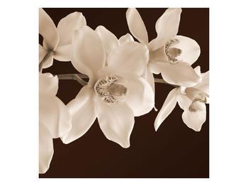Krásný obraz bílých květin (F001888F3030)