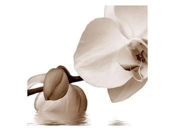 Krásný obraz bílé orchideje (F001900F3030)
