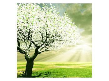 Obraz stromu na jaře (F002291F3030)