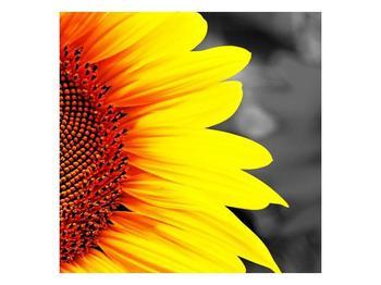 Obraz květu slunečnice (F002400F3030)