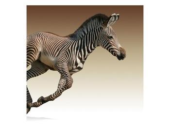 Obraz běžící zebry (F002416F3030)