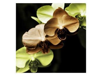 Obraz hnědých a zelených orchideí  (F002723F3030)