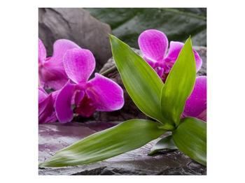 Obraz fialových orchidejí s listím (F004027F3030)