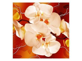 Obraz bílých orchidejí (F005694F3030)