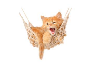 Obraz kočky v síti (K011123K3030)