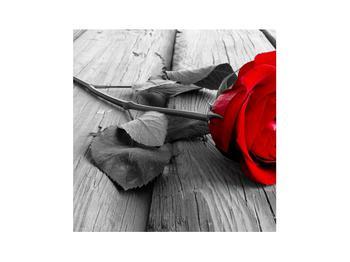Obraz rudé růže (K011138K3030)