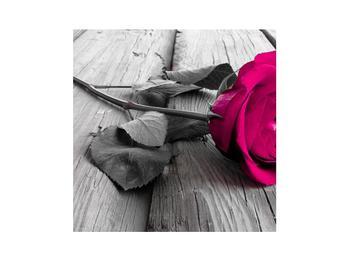 Obraz růžové růže (K011141K3030)