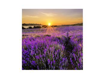 Obraz levanduľového poľa (K011154K3030)