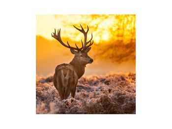 Obraz jelena (K011281K3030)