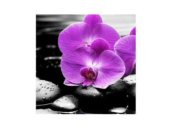 Obraz květů orchideje (K011379K3030)