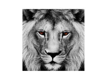 Černobílý obraz lva (K011390K3030)
