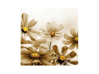 Obraz květů (K011484K3030)