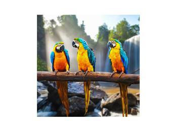 Obraz papoušků (K011994K3030)