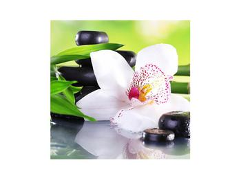 Obraz orchideje (K011995K3030)