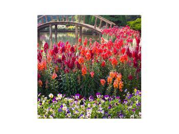 Obraz kvetín (K012048K3030)