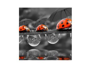 Obraz lienok sedembodkových s dáždnikmi (K012059K3030)