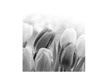 Černobílý obraz pučících tulipánů (K012127K3030)