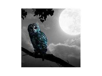 Tablou cu bufnița nocturnă (K012185K3030)