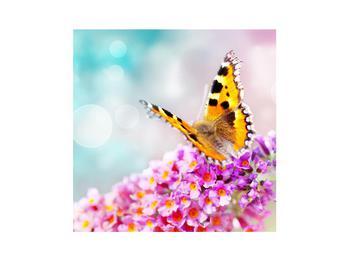 Obraz motýla na květech (K012351K3030)