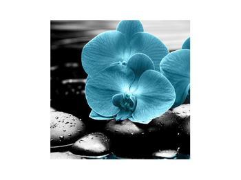 Tablou cu flori de orhidee albastre (K012398K3030)
