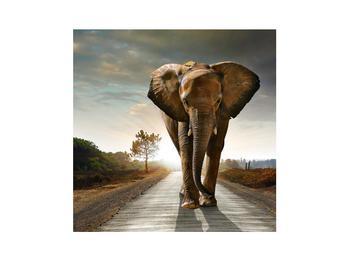 Tablou cu elefant (K012479K3030)