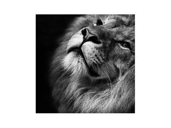 Černobílý obraz lva (K012767K3030)