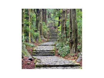 Obraz kamenných schodů v lese (K014268K3030)