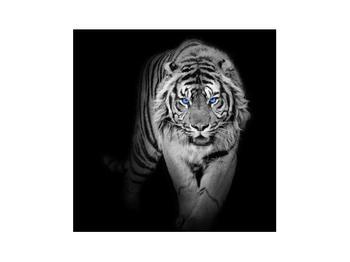 Obraz tygra (K014968K3030)