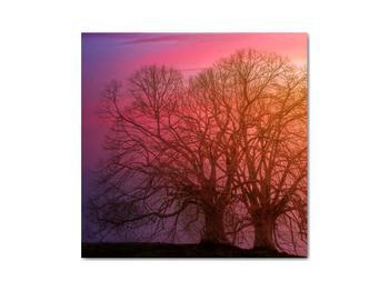 Obraz stromov v hmle (V020088V3030)
