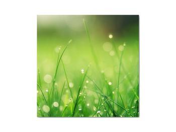 Obraz - rosa na tráve (V020169V3030)