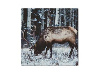 Obraz - jeleň v zime (V020179V3030)
