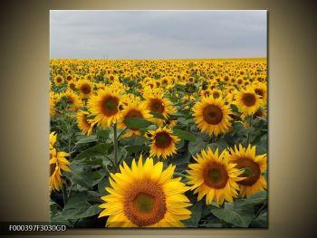 Obraz slunečnicového pole (F000397F3030GD)