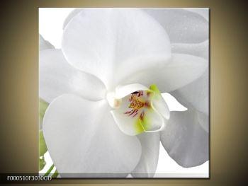 Obraz orchideje (F000510F3030GD)