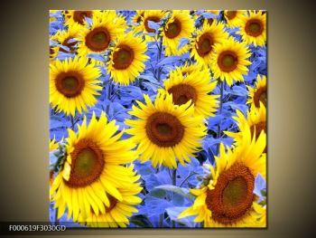 Obraz slunečnic (F000619F3030GD)