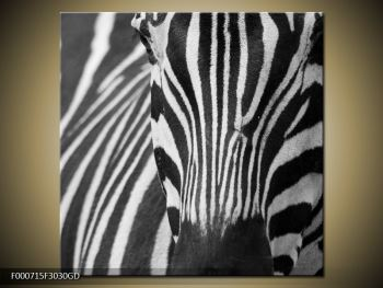 Obraz černobílého detailu zebry (F000715F3030GD)