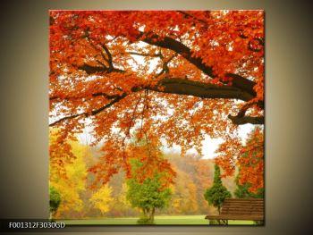 Krásný obraz podzimního parku (F001312F3030GD)