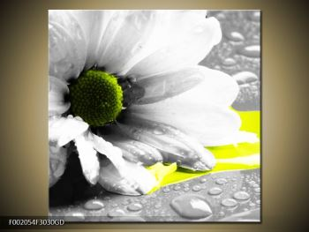 Obraz květiny a kapek rosy (F002054F3030GD)