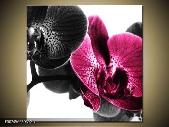 Obraz růžové orchideje (F002056F3030GD)