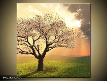 Obraz kvetoucího stromu (F002280F3030GD)