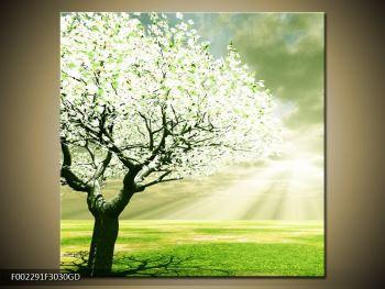 Obraz stromu na jaře (F002291F3030GD)