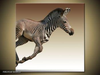 Obraz běžící zebry (F002416F3030GD)