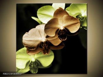 Obraz hnědých a zelených orchideí  (F002723F3030GD)