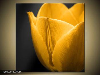 Moderný sklenený obraz F003630F3030GD (F003630F3030GD)