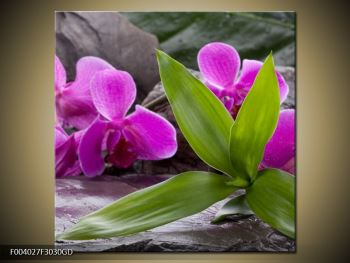 Obraz fialových orchidejí s listím (F004027F3030GD)