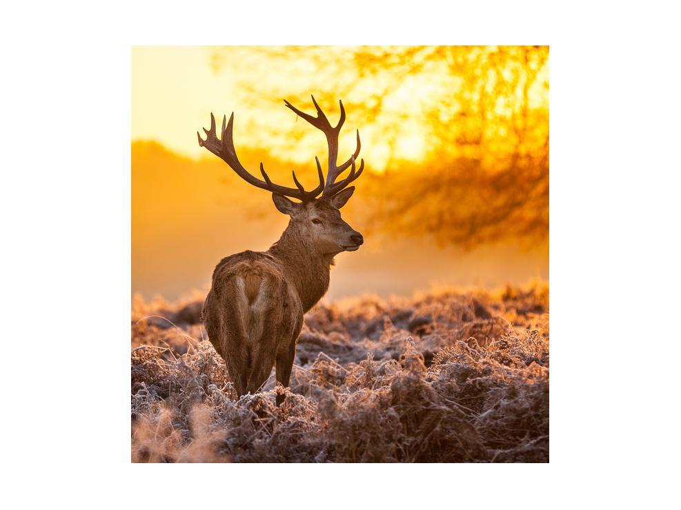 Slika jelena (K011281K4040)